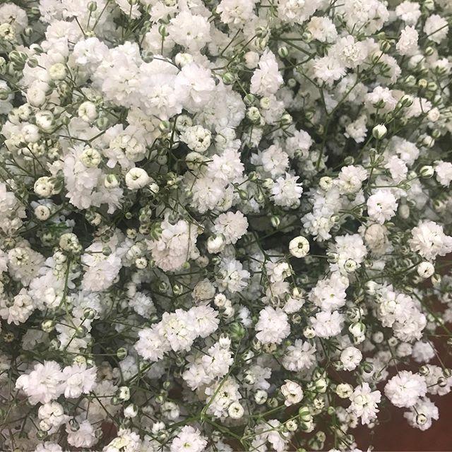 昭和からかすみ草が届きました息子の友達が手塩にかけて作っているかすみ草が手元に届いて。なんだかとても暖かい気持ちになりました昭和村のかすみ草は日本一の生産量。花が大きくドライにしてもとても可愛い️ 創作意欲がむくむく楽しみ〜❣️ #かすみ草 #かすみ草ブーケ #かすみ草ドライフラワー #昭和村 #昭和村かすみ草#会津美容室ソア