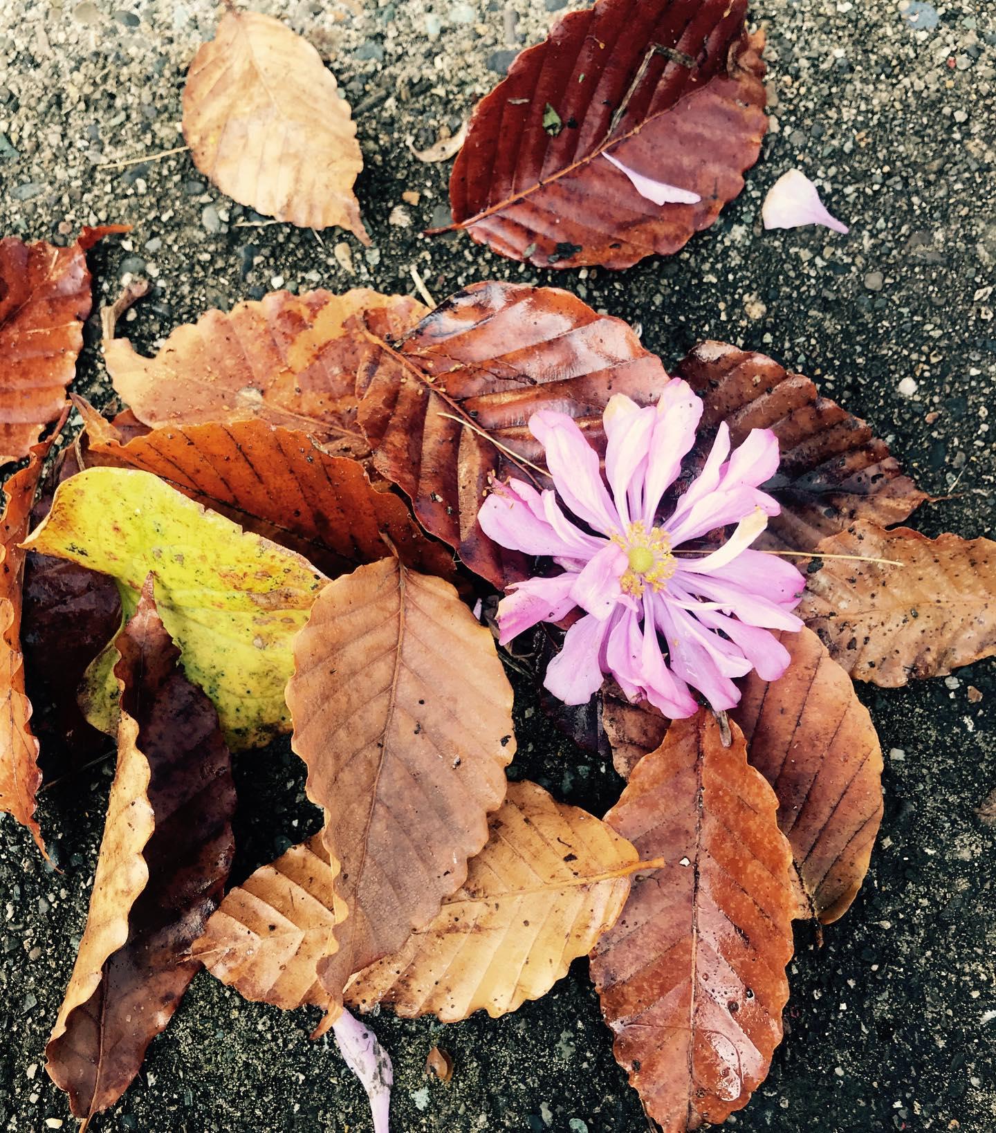 落ち葉にシュウメイギクの可愛いブローチ🧚♂️