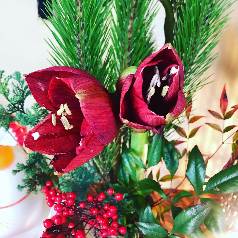 新年明けましておめでとうございます✧︎◝︎(*´꒳`*)◜︎✧︎˖会津地方は大雪の予報でしたが、今日は陽も差し穏やかに時間が過ぎています︎∗*゚我が家の床の間。。いつもお正月はポンポン菊が定番でしたが、今年はアマリリス(๑•∨︎•๑)深い紅色が和にも会いますね。今年もたくさんの方々との出逢い、そしてたくさんの出来事からたくさんの事を学び、感じる1年でありたいと思います(⌯︎¤̴̶̷̀ω¤̴̶̷́)✧︎本年もどうぞ宜しくお願い致します(⁎⁍̴̛ᴗ⁍̴̛⁎)