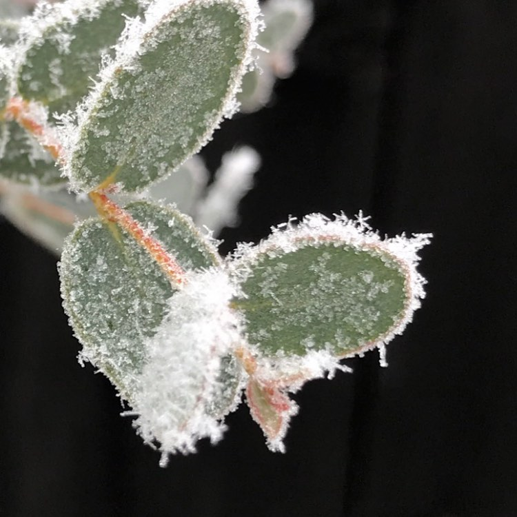 今朝は白い世界小さな氷の結晶が綺麗でした◡̈*♚‧*˚✩‧₊˚